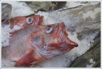 fisk1